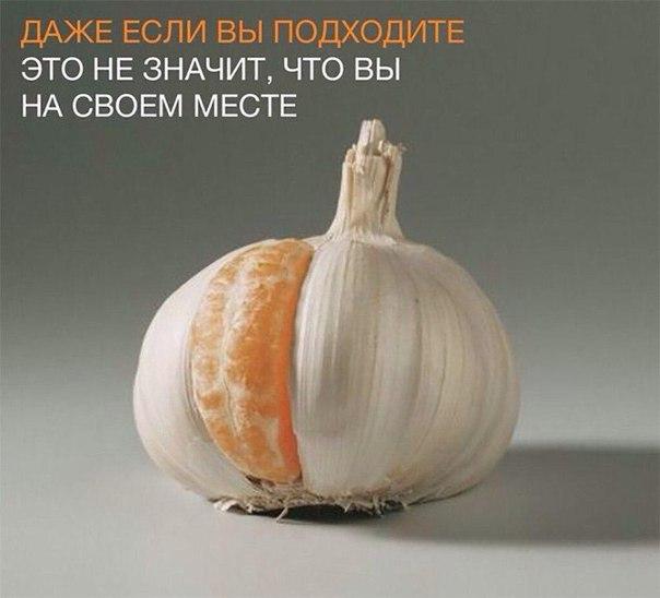 http://s1.uploads.ru/6rIPi.jpg