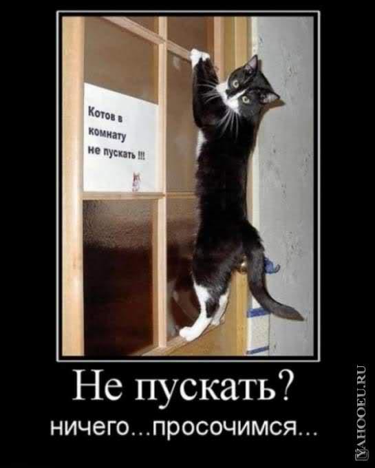 http://s1.uploads.ru/B9u6c.jpg
