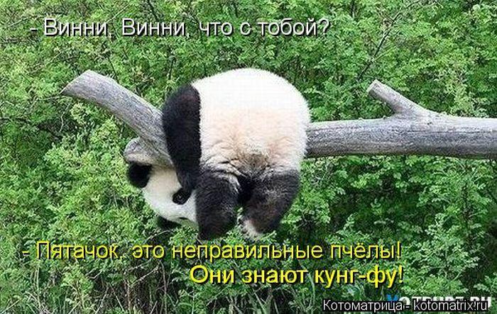 http://s1.uploads.ru/CPaJZ.jpg