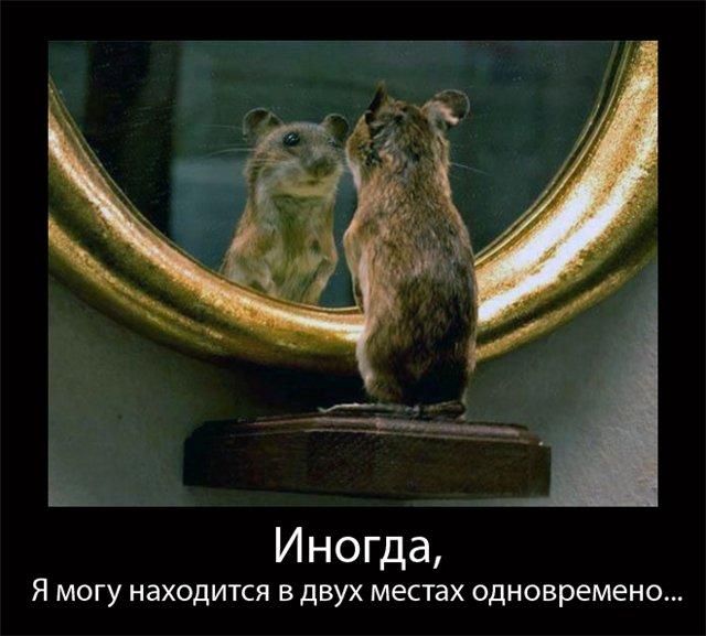 http://s1.uploads.ru/CmBhX.jpg