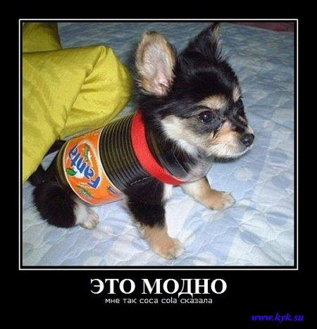 http://s1.uploads.ru/DnGaJ.jpg