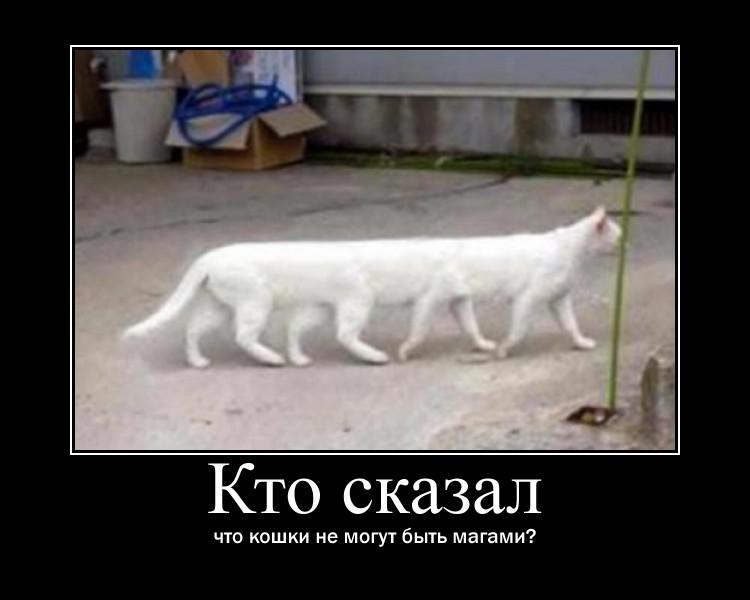 http://s1.uploads.ru/EgbXm.jpg