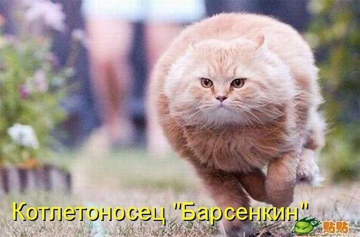 http://s1.uploads.ru/HSYf8.jpg
