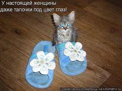 http://s1.uploads.ru/J8uax.jpg