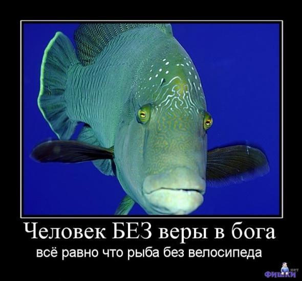 http://s1.uploads.ru/QIJif.jpg