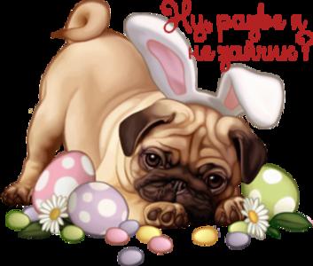 http://s1.uploads.ru/SDb1v.png