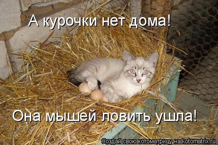 http://s1.uploads.ru/UByEW.jpg