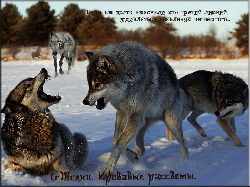 http://s1.uploads.ru/WOclj.jpg