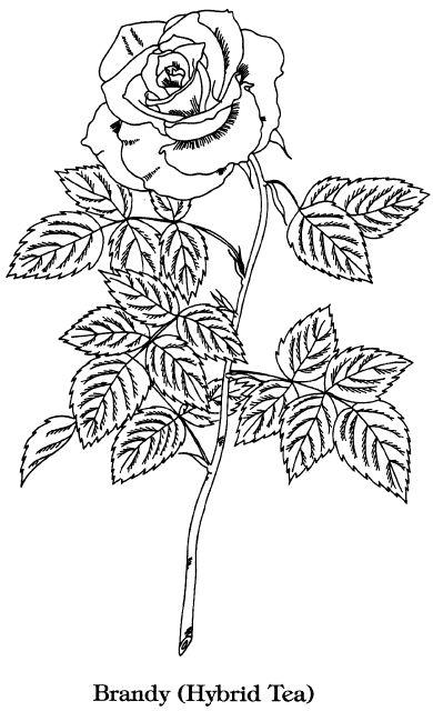 эскизы витражей витражные рисунки: