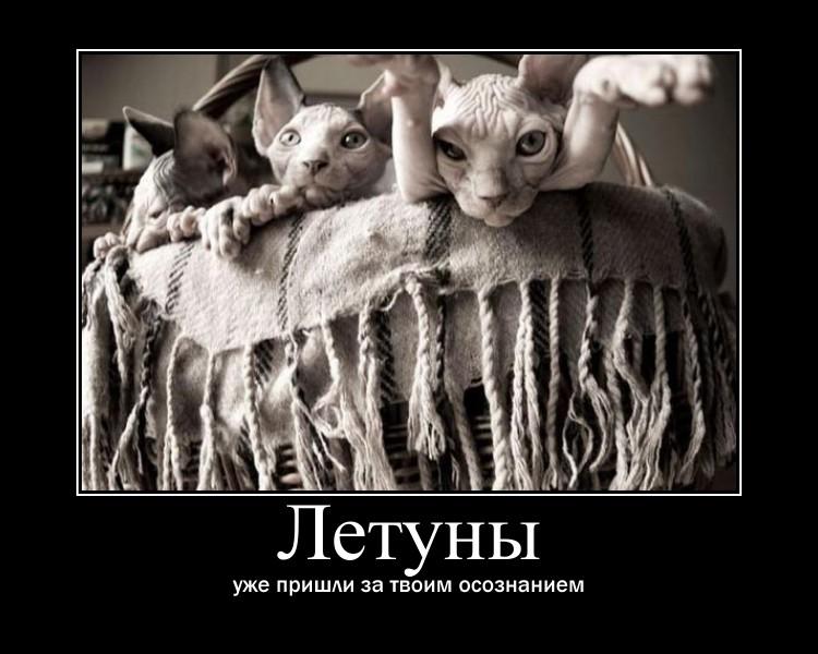 http://s1.uploads.ru/ZUXnf.jpg