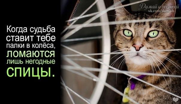 http://s1.uploads.ru/arKP5.jpg