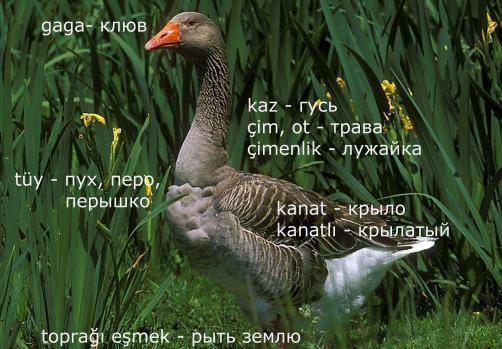 http://s1.uploads.ru/eusQq.jpg