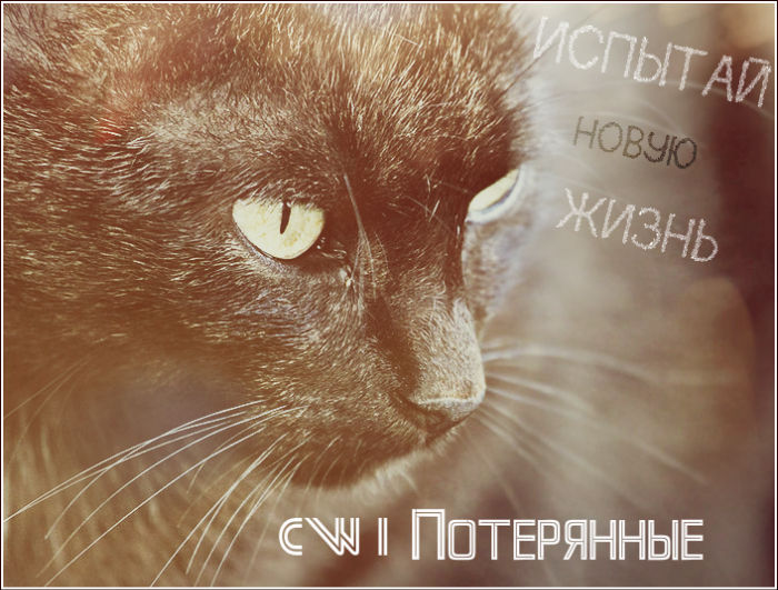 http://s1.uploads.ru/gmzJj.jpg