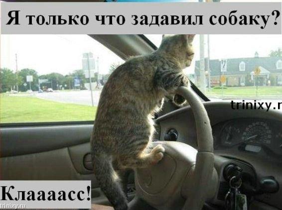 http://s1.uploads.ru/i/DCvNk.jpg