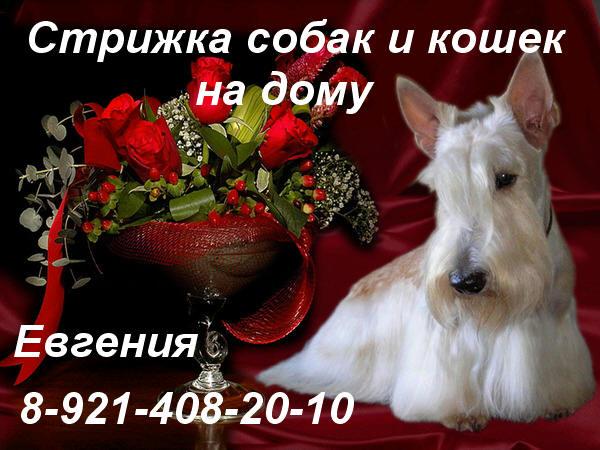 http://s1.uploads.ru/i/MYpd4.jpg