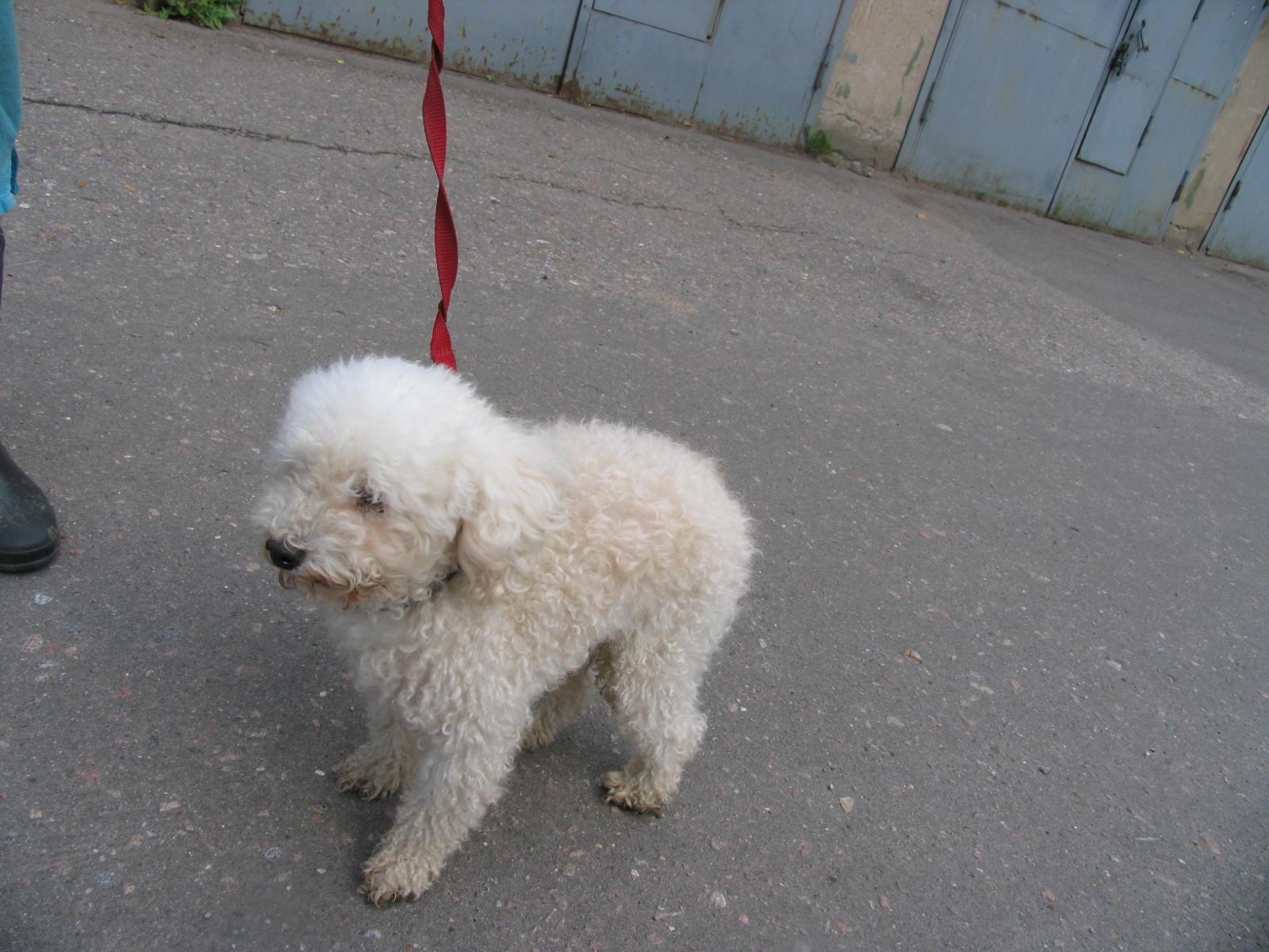 Катаракта у собак фото 6