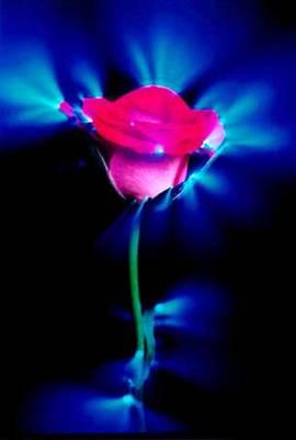 """Свечение зеленого листа и цветка розы в газоразрядной среде В настоящее время под термином """"эффект Кирлиан """"понимается..."""