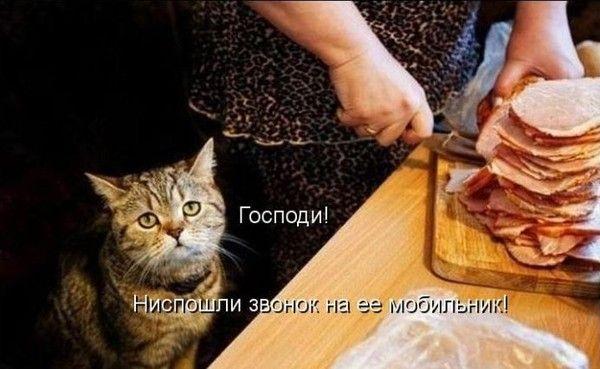 http://s1.uploads.ru/i/fFWt1.jpg