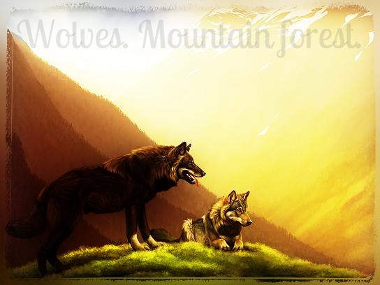 Волки. Горный лес