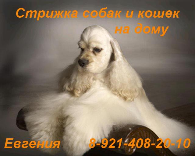 http://s1.uploads.ru/i/joFOW.jpg