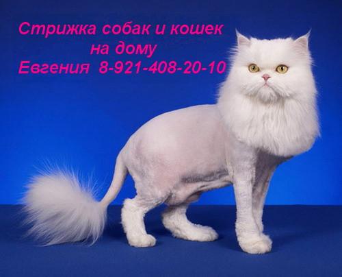 http://s1.uploads.ru/i/kOcUL.jpg