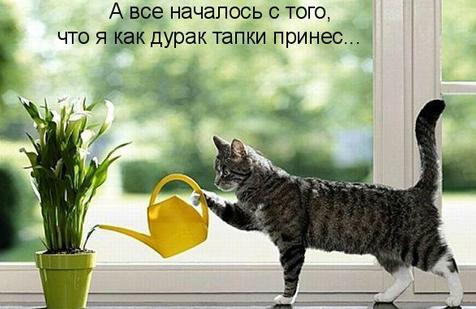 http://s1.uploads.ru/i/vBXRV.png