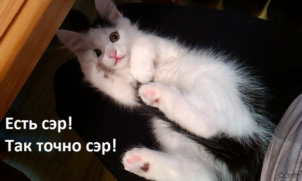 http://s1.uploads.ru/k230w.jpg