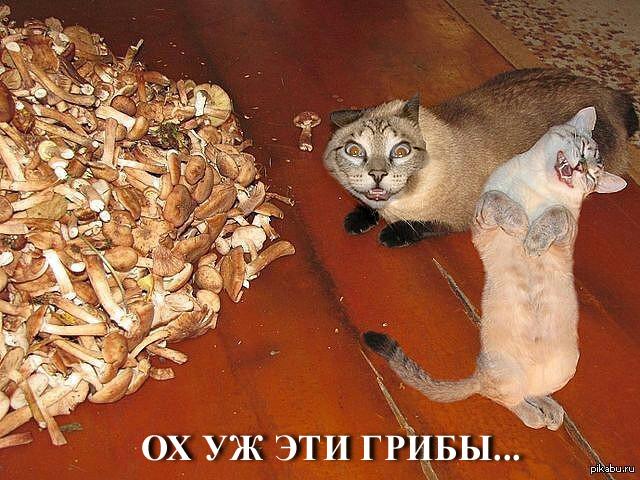 http://s1.uploads.ru/nj13R.jpg
