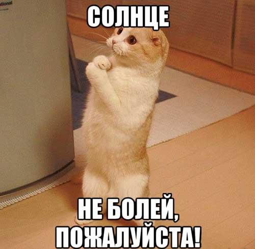 http://s1.uploads.ru/pbgTD.jpg