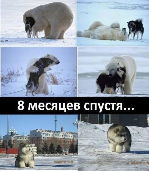 http://s1.uploads.ru/rmfbz.jpg