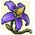 Дурманный цветок