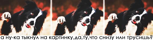 http://s1.uploads.ru/s86GO.png