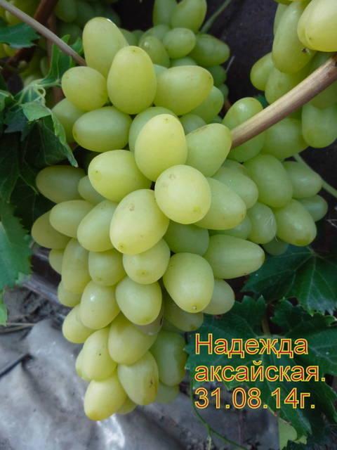 http://s1.uploads.ru/t/1TjV4.jpg