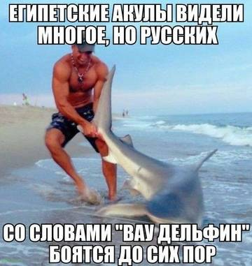 http://s1.uploads.ru/t/1gzpw.jpg