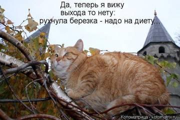 http://s1.uploads.ru/t/2IQv1.jpg