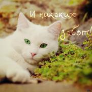 http://s1.uploads.ru/t/56obd.jpg