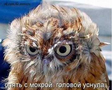 http://s1.uploads.ru/t/5FIl4.jpg