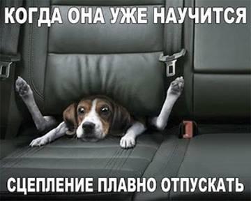 http://s1.uploads.ru/t/7WX4D.jpg
