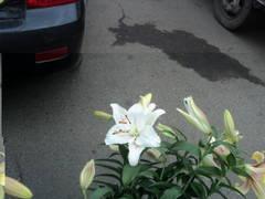 http://s1.uploads.ru/t/84tA9.jpg