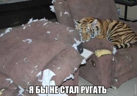 http://s1.uploads.ru/t/90pJK.jpg
