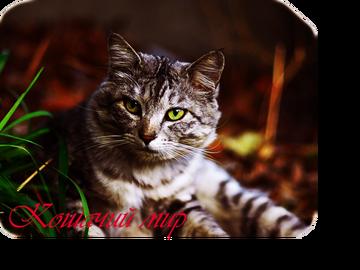 http://s1.uploads.ru/t/916uW.png