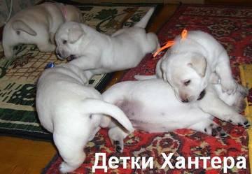 http://s1.uploads.ru/t/9rDeT.jpg