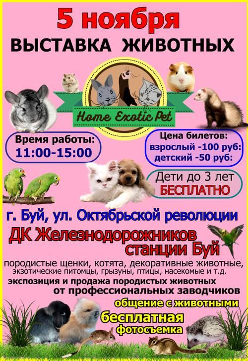 http://s1.uploads.ru/t/A41va.jpg