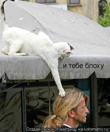 http://s1.uploads.ru/t/BRqz0.jpg