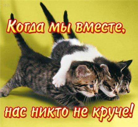 http://s1.uploads.ru/t/EUkXf.jpg