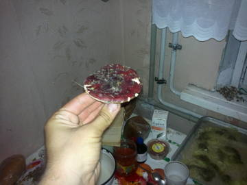 http://s1.uploads.ru/t/F1ykg.jpg