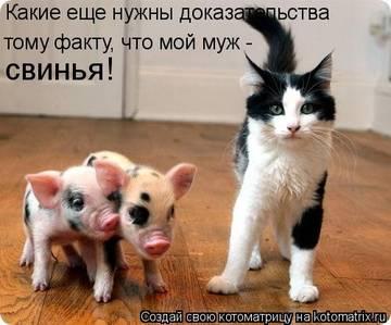 http://s1.uploads.ru/t/GZfVz.jpg