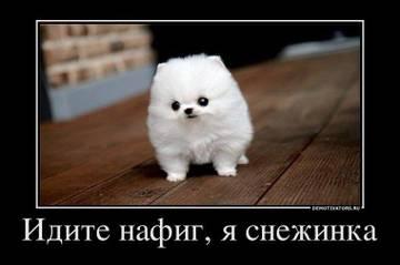 http://s1.uploads.ru/t/GkSdY.jpg