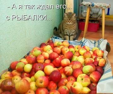http://s1.uploads.ru/t/Igr5y.jpg