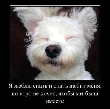 http://s1.uploads.ru/t/KENrl.jpg